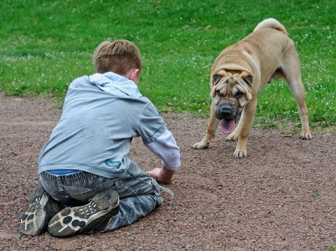 equilibre dibete chien